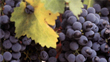 A Simple Wine Affair